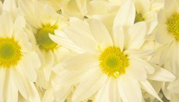 Achtung: Die 15 giftigsten Pflanzen für Kinder