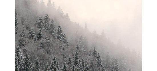 DVDer Naturoplevelser DVD Vinter