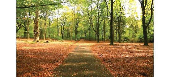 DVDer Naturoplevelser DVD Cykeltur i skoven