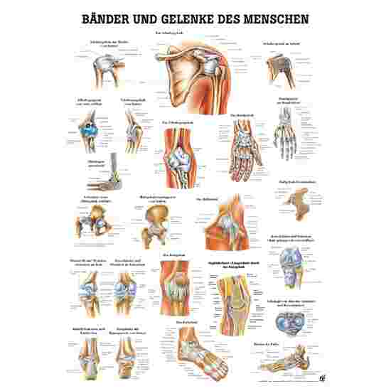 Anatomic Wall Charts (in German) Ligaments and joints
