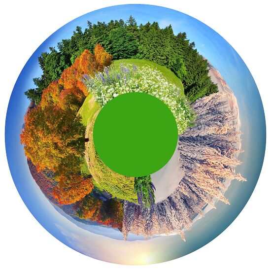Effekträder Waldpanorama