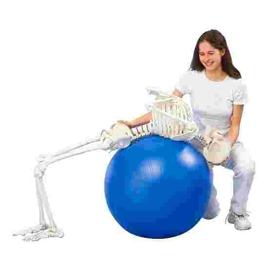 """Erler Zimmer """"Hugo"""" Flexible Skeleton"""
