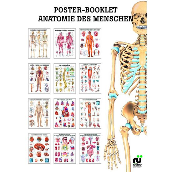 Miniposter-Booklet Anatomie