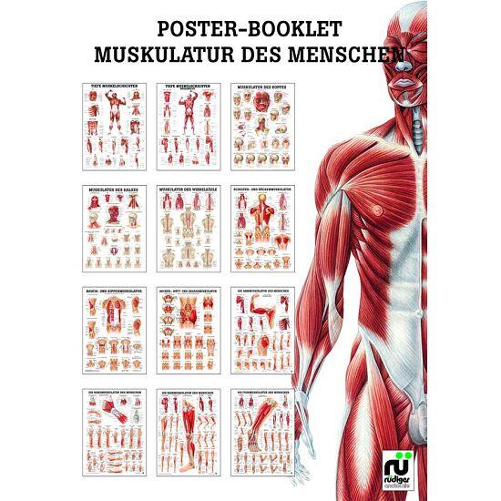 Miniposter-Booklet Muskulatur