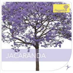 "CD ""Jacaranda"""